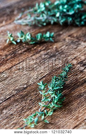Green Thyme Sprig