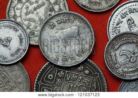 Coins of Nepal. Hindu sacred cow depicted in the Nepalese 10 paisa coin.