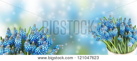 Delicate blue floral background with fresh spring flowers