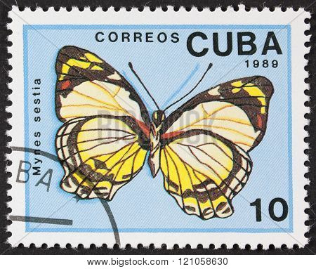 Cuba Butterfly