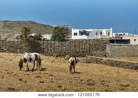 Rural landscape with two horses, Mykonos island, Greece