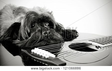Doggy And Guitar.
