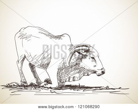 Sketch of zebu cow that is going to stand up, Hand drawn illustration