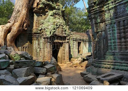 Giant tree covering the ruin of Ta Prohm temple in Angkor Wat (Siem Reap, Cambodia)