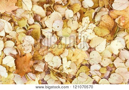 Retro Looking Leaves Background