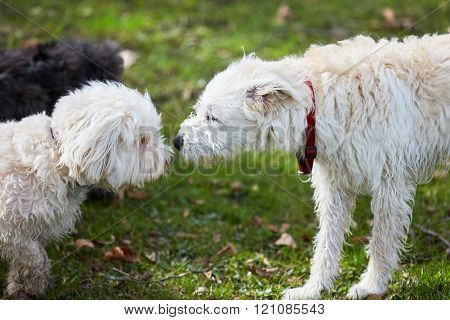 Three Dogs Sniffing Each Other In The Park