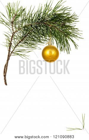Christmas toy on pine branch