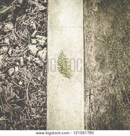 Pine Leaf Falling On Concrete Block