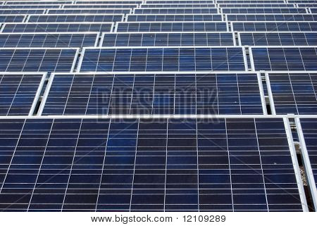 rows of blue and white solar panels