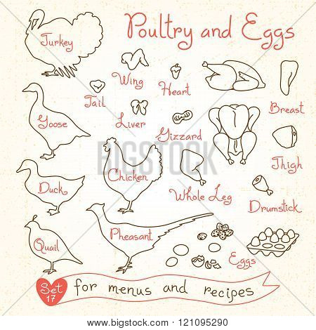 Set drawings of poultry and egg for design menus, recipes. Poultry meat chicken, turkey, goose, duck