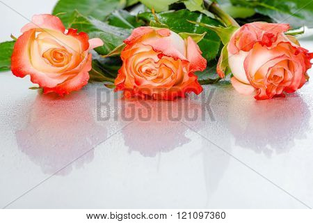 Beautiful Three Pink Rose Flowers On Light Background With Drops, Close Up