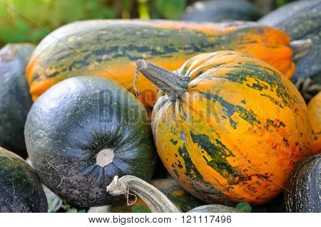 Harvested Pumpkins On A Field