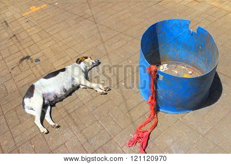 Poisoned dog near garbage can in african village. Save animals concept.