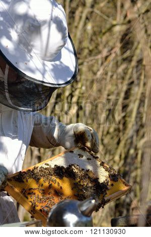 Beekeeper with honeycomb in the foreground Smoker