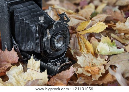 Vintage Photo Camera  In Autumn Park