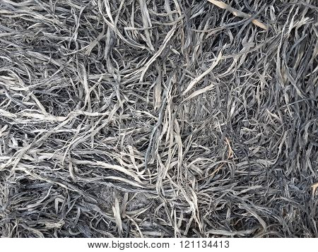 close up dry ash on the ground