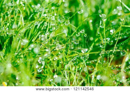 Dewdrop on grasses