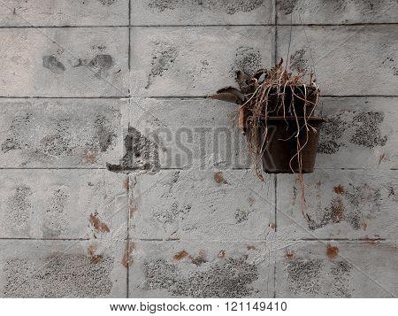 dead plants on cement wall