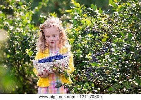 Little girl picking blueberry