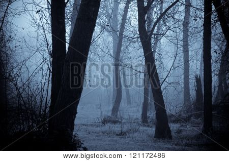 Mood Shadows In The Dark Misty Forest