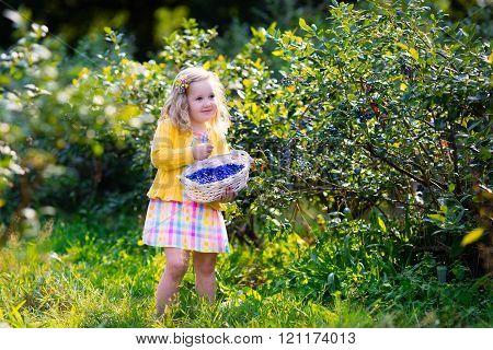 Little Girl Picking Blueberry In The Garden