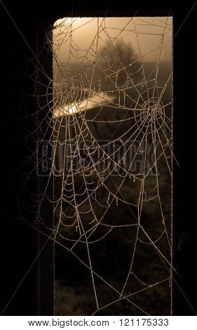 Frost melting on two cobwebs, reflecting the warm glowing colors of the sunrise, with natural border
