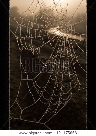 Frost melting on cobweb, reflecting the warm glowing colors of the sunrise, with natural border