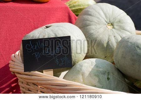 Stella Squash At The Farmers Market