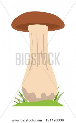 Brown mushroom Illustration on white background. Mushrooms vector illustrations. Mushrooms vegetable isolated. Brown  mushrooms fresh healthy organic food. Mushrooms fresh food. Mushrooms Brown
