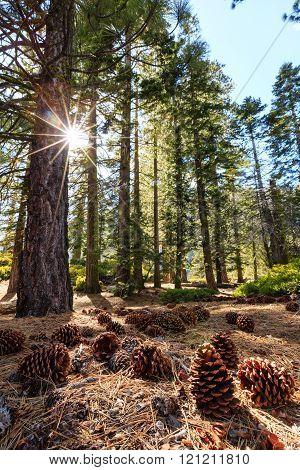 Beauty Of Yosemite