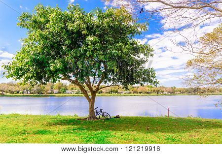 A Bicycle And A Man Lays Down Under The Tree
