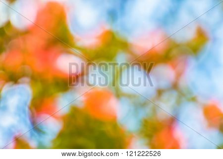 Out Of Focus Of Rhododendron Arboreum