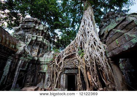 Ta Prohm temple also known as the Tomb Raider temple in the Angkor complex, Cambodia