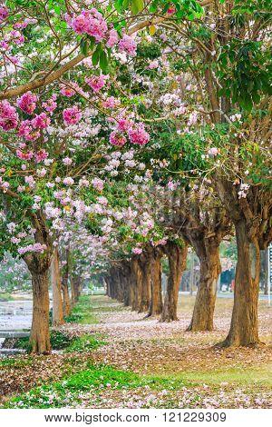 Blooming Pink Trumpet