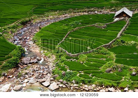 Stepped rice patty terraces in the north Vietnamese city of Sapa
