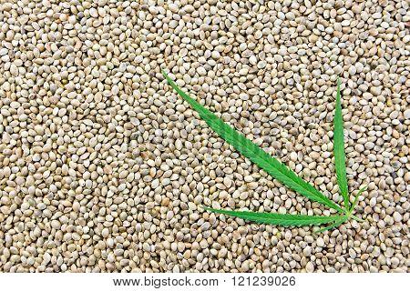 Hemp seeds with leaf