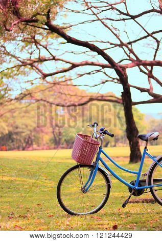 bicycle on the lawn