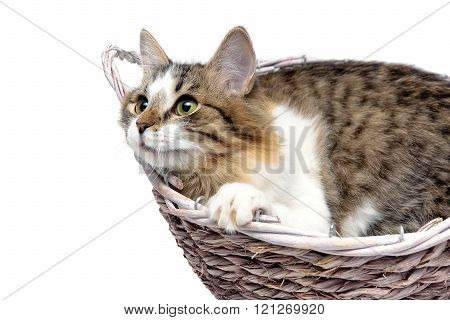 Fluffy Cat Lies In A Wicker Basket Close-up On A White Background