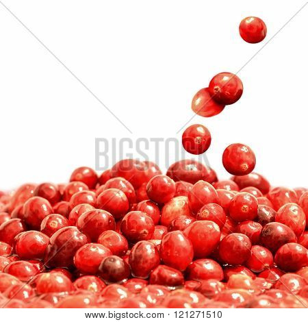 Delicious ripe cranberries falling, isolated over white background