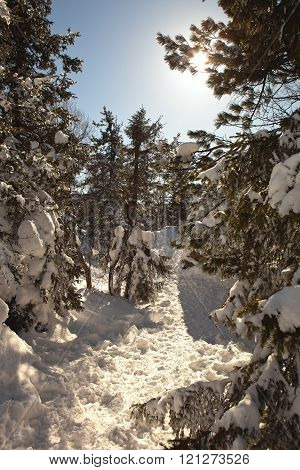 Magic, winter, snow-covered forest on the summit of Mount White. Nizhny Tagil. Russia.