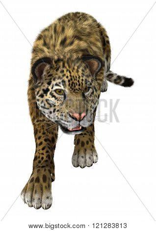 Big Cat Jaguar On White