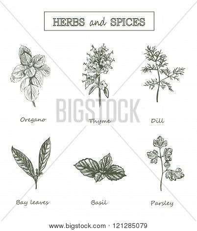 Herbs And Spices Set. Medicinal Herbs. Organic Healing Herbs. Vector Spices And Herbs Illustrations.