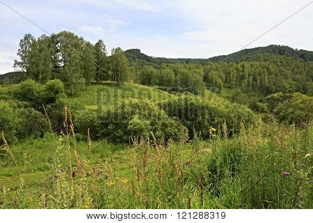 Green forest on hills of Altai Krai.