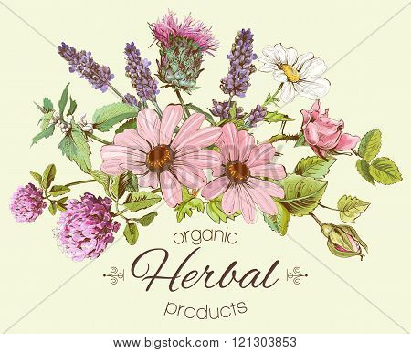 Vector vintage hand-drawn composition with wild flowers and herbs. Design for cosmetics, store, beauty salon, natural and organic products. Can be used like a greeting card.