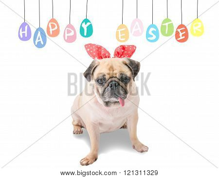 Happy Easter. Dog Pug Wearing Rabbit Bunny Ears Sitting Near Pastel Colorful Of Eggs With Copy Space