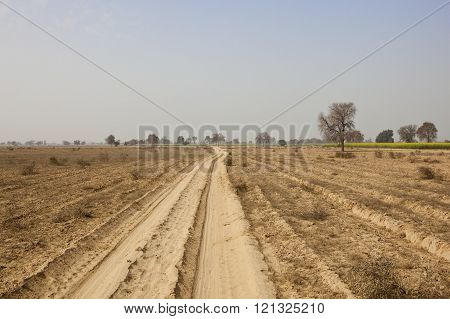 Dusty Rajasthan Landscape