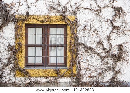 Window overgrown with ivy or grape, architecture