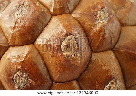 Texture macro of imbricate hexagonal pine cone scales.