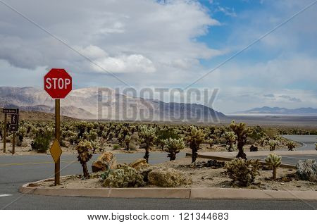 Stop Sign In Cholla Garden Desert