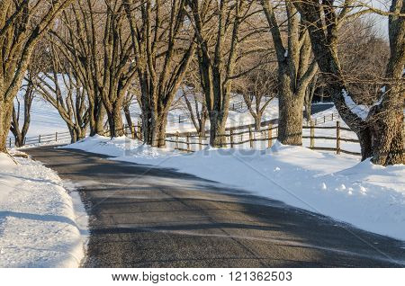 Curvy Road in Winter